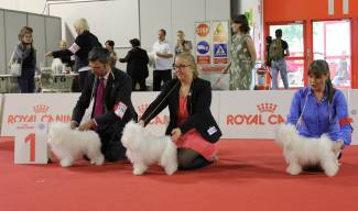 Fanttu gained the 4th position in the Open class in the World dog show in Milan, Italy, in 2015